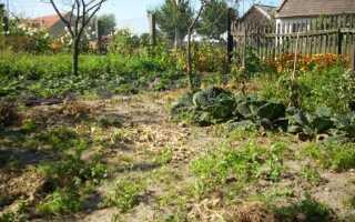 Сентябрь в саду: есть что-нибудь еще, чтобы посеять или посадить?