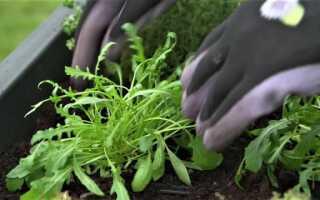 Как выращивать травы и овощи, когда у нас не так много места