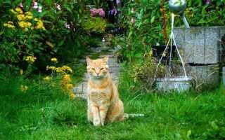 Кошка в саду — что ему грозит. Как позаботиться о его безопасности