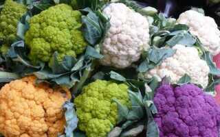 Цветная капуста в саду — сорта, условия выращивания и использование