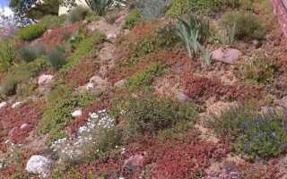 Покрывайте растения как плед. Они решат проблему пустого пространства