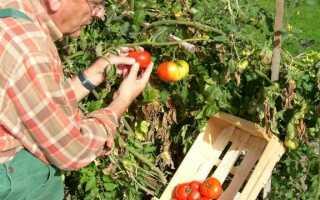Добейтесь здоровья для помидоров — какими свойствами обладает это растение