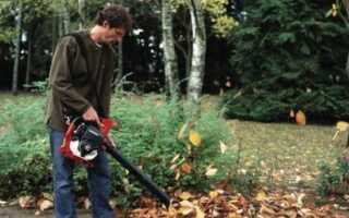 Осенняя уборка в саду. Как бороться с листьями