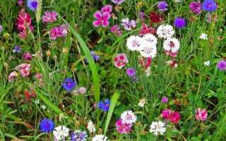 Индикаторные растения подскажут, что земля в саду