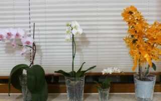 Орхидеи в обустройстве дома: их выращивание и сорта (ФОТО, ВИДЕО)