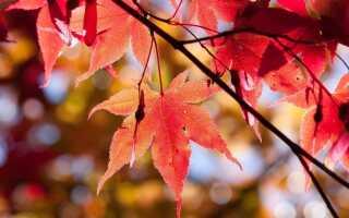 Цвета в саду — растения с красными листьями и плодами