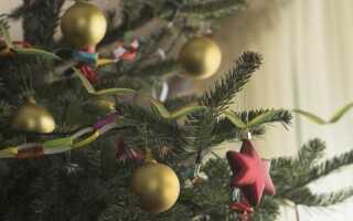 Какую елку выбрать на праздники (ВИДЕО)