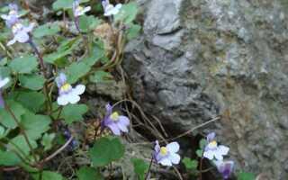 Растения для садовых рокариев — цветут с весны до осени