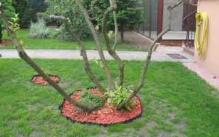 Как долить траву на газон?