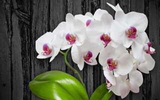 Уход за орхидеями. Как выращивать орхидеи в домашних условиях