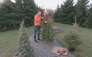 Что делать с елкой после Рождества (ВИДЕО)