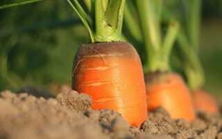 Выращивание овощей по координатам