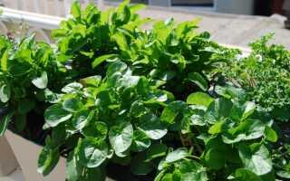 Рукола и смешанные листья салата с винегретом