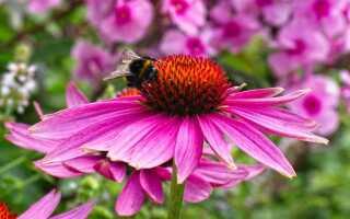 Цветы и мед. Мы рекомендуем самые медоносные растения для сада