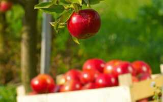 Лапша с яблоками