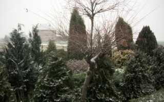 Снег в саду и защита растений. Обеспечение и укрытие растений на зиму