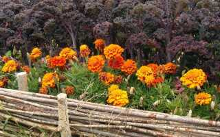 Полезные растения для сада, которые защищают от вредителей и болезней
