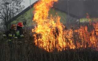 Сжигание травы — почему это очень плохая привычка и чем она грозит