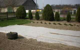 Задний двор. Как вырастить капусту, корнеплоды и рапс