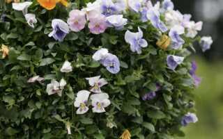 Композиции цветов в подвесных корзинах