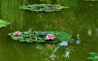 Растения для пруда — что выбрать, что искать