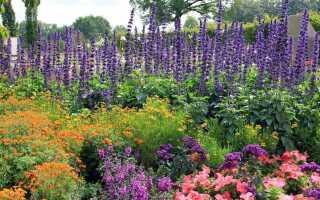 Цветущая скидка в течение всего сезона. Какие растения сажать на солнце и в тени