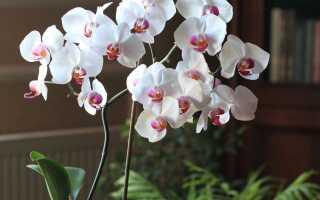 Самодельные способы для красивых цветов в горшках. Эффективно и безопасно