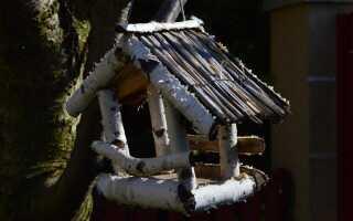 Кормление птиц зимой —