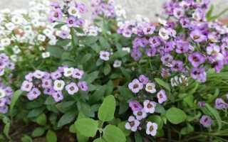 Какие летние цветы посеяны в апреле — как это сделать
