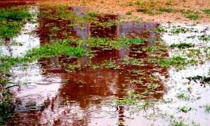 Сад после проливных дождей — как позаботиться о нем