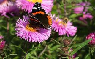 Осеннее удобрение растений — что и как удобрять растения осенью