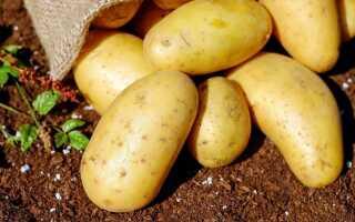 Какой картофель для приготовления, салатов и жарки. Руководство по картофелю