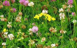 Сорняки и мох на газоне. Как от них избавиться