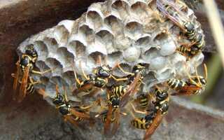 Пчелы, осы и шершни в саду — как убрать гнездо этих насекомых