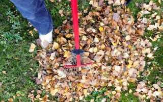 Садовые работы в ноябре — что еще можно сделать