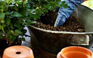 Уход за растениями — керамзит