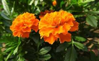 7 самых популярных однолетних цветов со скидками