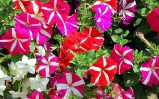 Однолетние растения для балкона: цветы с весны до поздней осени