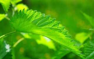 Как защитить растения без химии. Рецепты натуральных препаратов