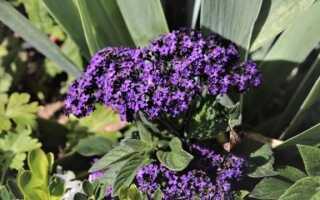 Рассада: посев семян овощей и растений в феврале