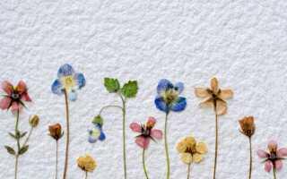Цветочные украшения — роспись на стене