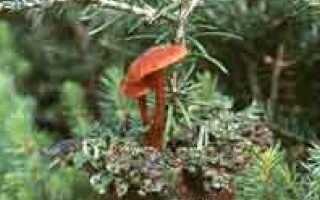 Микориза — пышный рост растений