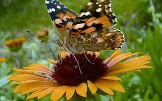 Биодинамическое выращивание растений: в полной гармонии с природой