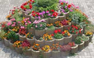 JONIEC советует — как использовать садовые газоны