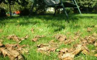 Подготовка сада к зиме. Осенняя работа в саду