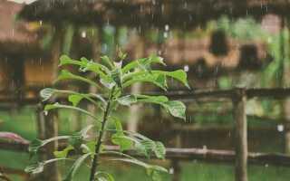 Как шторм влияет на растения в саду. Отрицательная и положительная ионизация воздуха
