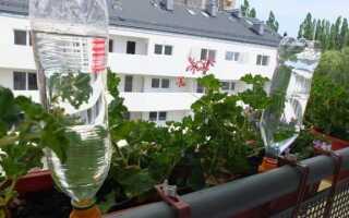 Как поливать растения в горшках в праздничные дни?