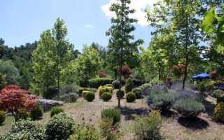 Деревья и кустарники на участке: какие из них стоит выращивать