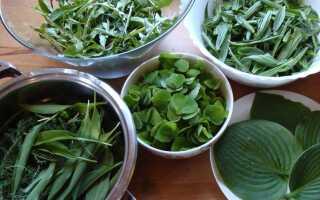 Весенние блюда из дикорастущих растений. Рекомендуем проверенные рецепты