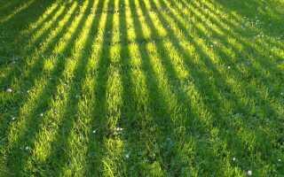 Весенний газон — важная работа по уходу